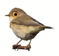 bird trans